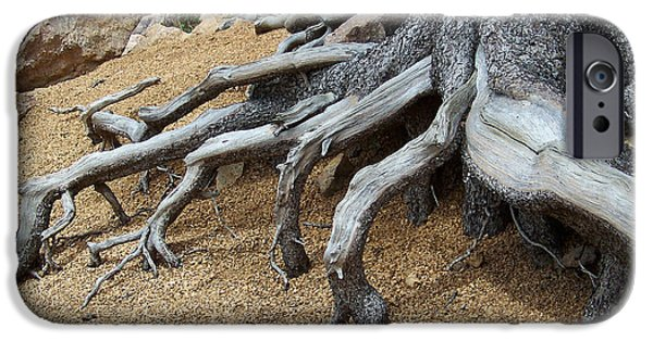 Tree Roots Digital iPhone Cases - Roots iPhone Case by Ernie Echols