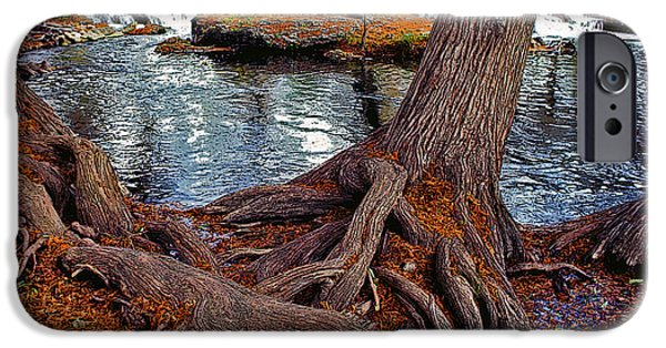 Tree Roots iPhone Cases - Roots on the River iPhone Case by Stephen Anderson