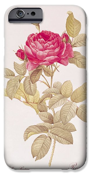 Langlois iPhone Cases - Rosa Gallica Pontiana iPhone Case by Pierre Joseph Redoute