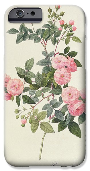 Flowers Drawings iPhone Cases - Rosa Multiflora Carnea iPhone Case by Pierre Joseph Redoute