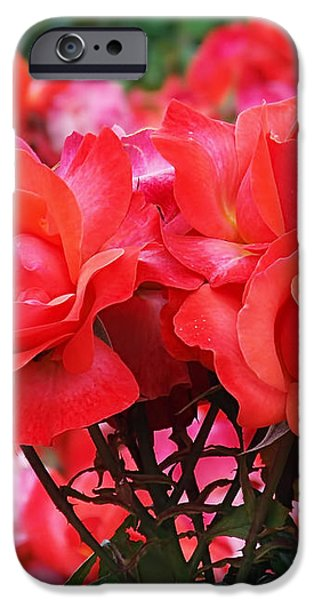 Rose Abundance iPhone Case by Rona Black