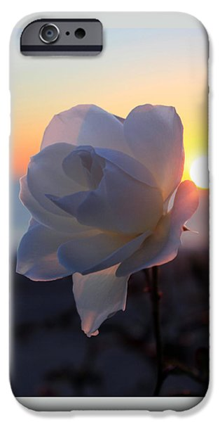 Epic iPhone Cases - Rose and a Sunset iPhone Case by Flat Owl Photo