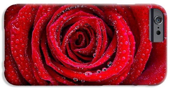 Close Up Floral iPhone Cases - Rose and Drops iPhone Case by Carlos Caetano