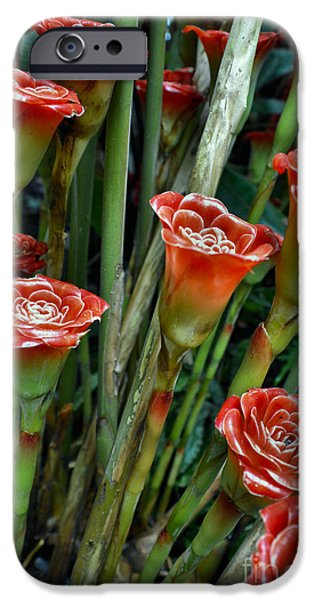 Petals Tapestries - Textiles iPhone Cases - Rose Batch iPhone Case by Edna Weber