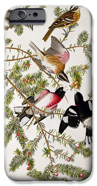 Plant Drawings iPhone Cases - Rose breasted Grosbeak iPhone Case by John James Audubon
