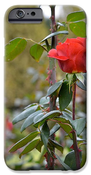 Shinjuku iPhone Cases - Rose iPhone Case by Corinne Rhode