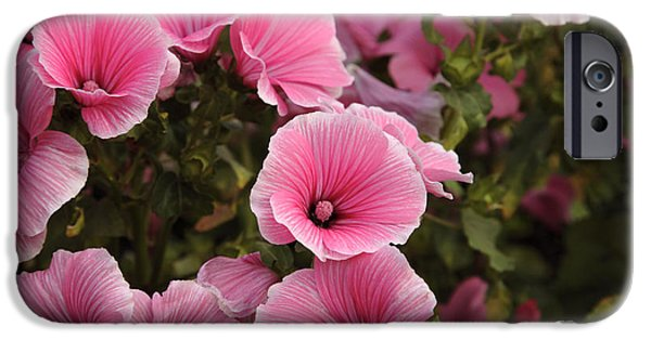 Recently Sold -  - Prescott iPhone Cases - Rose Mallow Flowers iPhone Case by Erin Paul Donovan
