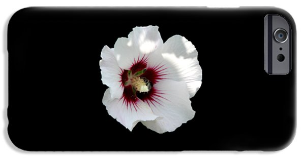 Artists4god iPhone Cases - Rose of Sharon Flower and Bumble Bee iPhone Case by Rose Santuci-Sofranko