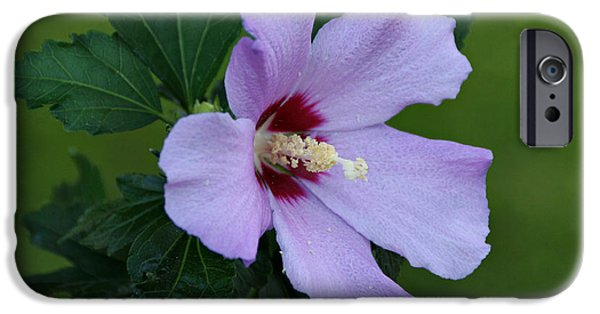 Indiana Photography iPhone Cases - Rose of Sharon iPhone Case by Sandy Keeton