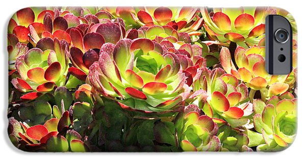 Disc iPhone Cases - Rose Succulents  iPhone Case by Natalie Ortiz