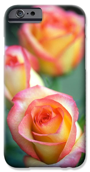 Rose Trio iPhone Case by Kathy Yates