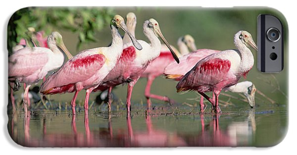 Recently Sold -  - Fauna iPhone Cases - Roseate Spoonbill Flock Wading In Pond iPhone Case by Tim Fitzharris
