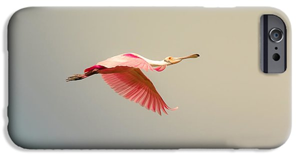 Cabin Window iPhone Cases - Roseate Spoonbill Flying iPhone Case by Robert Frederick