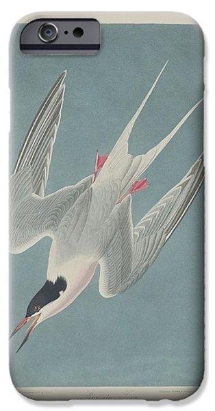 Tern iPhone Cases - Roseate Tern iPhone Case by John James Audubon