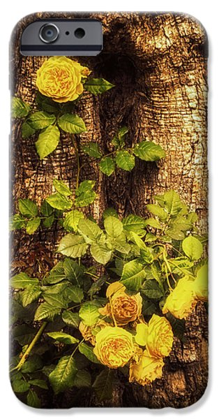 Rose iPhone Cases - Roses on Tree Bark iPhone Case by Wim Lanclus