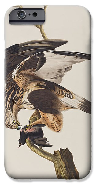 Falcon iPhone Cases - Rough Legged Falcon iPhone Case by John James Audubon