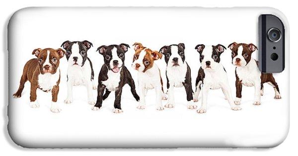Boston iPhone Cases - Row of Boston Terrier Puppies iPhone Case by Susan  Schmitz