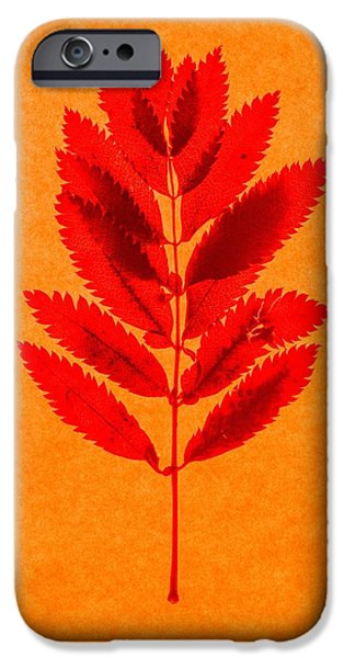Plant iPhone Cases - Rowan leaves iPhone Case by Graeme Harris
