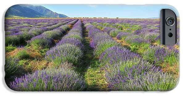 Agriculture iPhone Cases - Rows of Lavender iPhone Case by Donna Kennedy