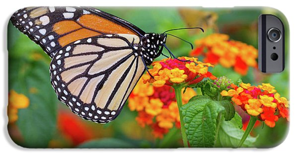 Hershey iPhone Cases - Royal Butterfly iPhone Case by Shelley Neff
