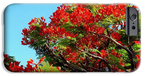 Floral Photographs iPhone Cases - Royal Poinciana Orange iPhone Case by James Temple