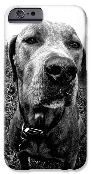 Dog Close-up iPhone Cases - Ruby in Black and White iPhone Case by Jennifer McGuire