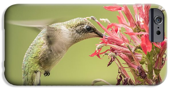 Birds iPhone Cases - Ruby Throated Hummingbird 10-2015 iPhone Case by Thomas Young