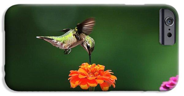 Flight iPhone Cases - Ruby-Throated Hummingbird Feeding On Orange Zinnia Flower iPhone Case by Christina Rollo