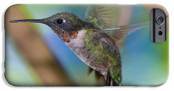 Flight iPhone Cases - Ruby Throated Hummingbird in Flight iPhone Case by Deb Henman