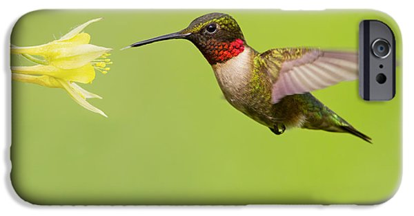 Archilochus Colubris iPhone Cases - Ruby-Throated Hummingbird iPhone Case by Mircea Costina Photography