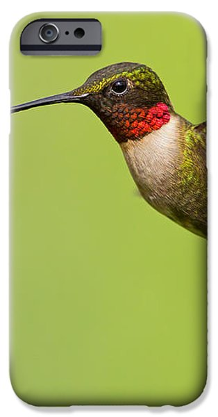 Ruby-Throated Hummingbird iPhone Case by Mircea Costina Photography