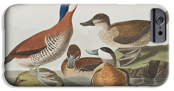 Sea Birds Drawings iPhone Cases - Ruddy Duck iPhone Case by John James Audubon