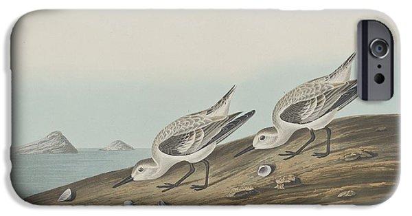 Shorebird iPhone Cases - Ruddy Plover iPhone Case by John James Audubon