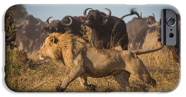 Lions Photographs iPhone Cases - Running For His Life iPhone Case by Marc Meijlaers