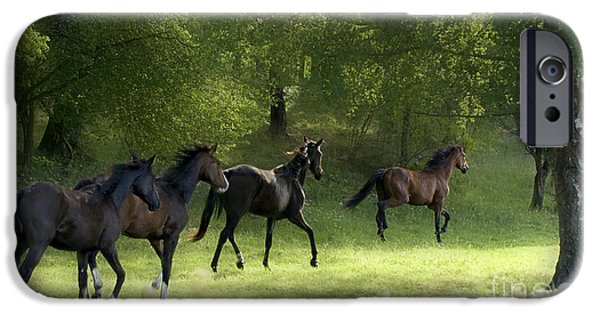 Horse iPhone Cases - Running horses in the wild iPhone Case by Allan Wallberg