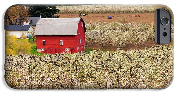 Fruit Tree iPhone Cases - Rural Color iPhone Case by Mike  Dawson