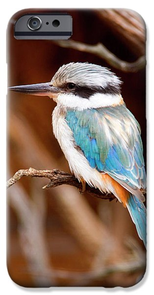 Sacred KingFisher iPhone Case by Mike  Dawson