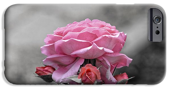 Pastel iPhone Cases - Sad pink rose with three buds iPhone Case by Adrian Bud
