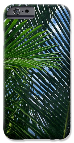 Palm Tree Greeting Cards iPhone Cases - Sago Palm Fronds iPhone Case by Mark Sellers