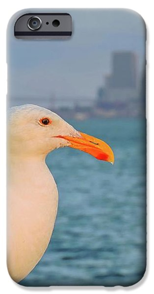 Bay Bridge iPhone Cases - San Francisco Seagull iPhone Case by Connor Beekman