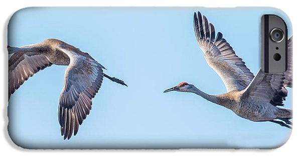 Sea Birds iPhone Cases - Sand Hill Cranes Flying iPhone Case by Paul Freidlund