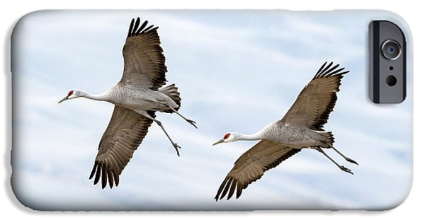 Glides iPhone Cases - Sandhill Crane Approach iPhone Case by Mike Dawson
