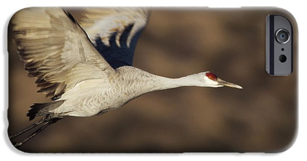 New Individuals iPhone Cases - Sandhill Crane Flying Bosque Del Apache iPhone Case by Tim Fitzharris