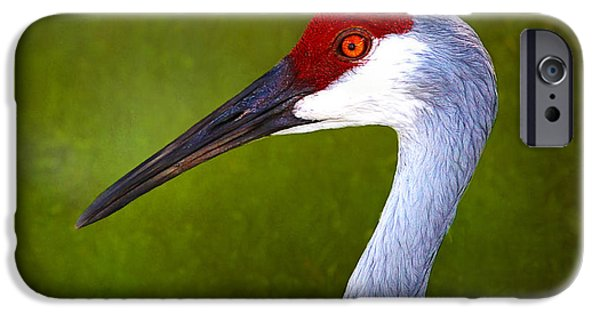 Wild Animals iPhone Cases - Sandhill Crane iPhone Case by Judi Bagwell