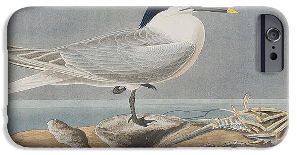 Tern iPhone Cases - Sandwich Tern iPhone Case by John James Audubon