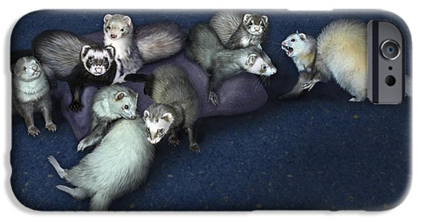 Bhymer iPhone Cases - Sandys Ferrets iPhone Case by Barbara Hymer