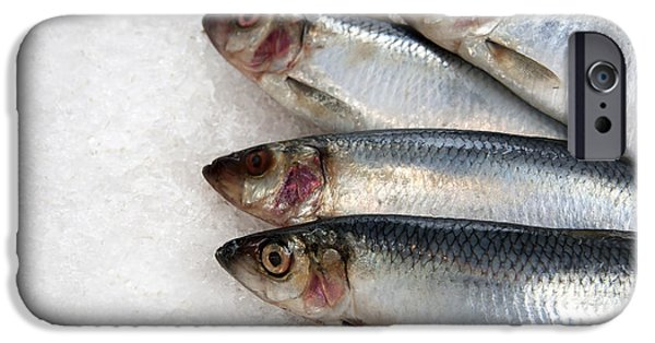 Protein iPhone Cases - Sardines on ice iPhone Case by Jane Rix