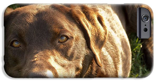 Chocolate Lab iPhone Cases - Satisfaction iPhone Case by Agata Wisniowska