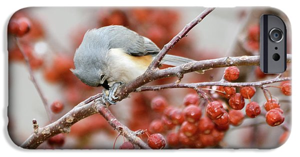 Tufted Titmouse iPhone Cases - Satisfaction iPhone Case by Betty LaRue