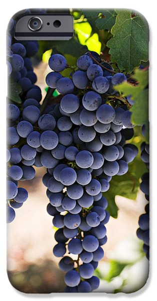 Vineyard Landscape iPhone Cases - Sauvignon grapes iPhone Case by Garry Gay